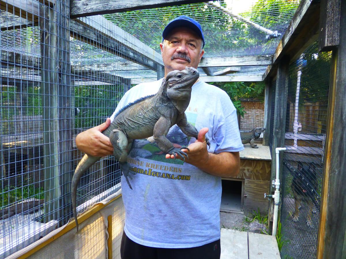 /Iguanas/Cyclura/Rhino