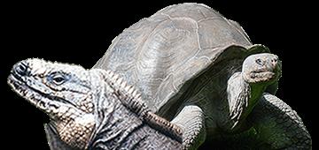 Florida Iguana & Tortoise Breeders