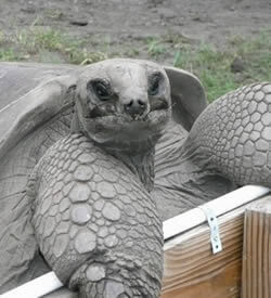 Tortoises Menu