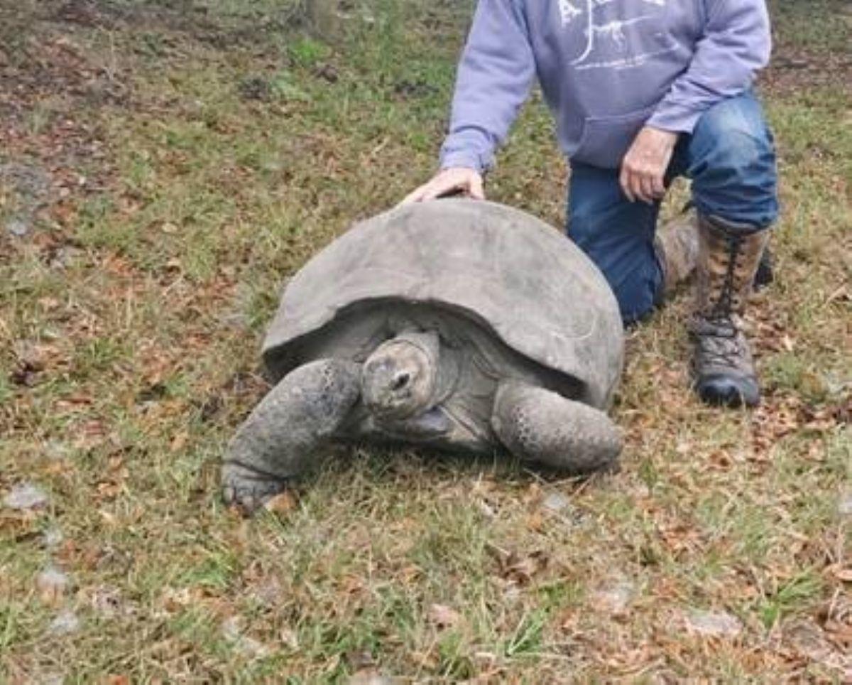 aldabra-female.jpg