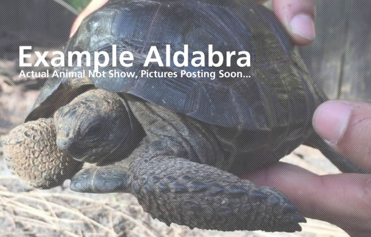 10627/screen/Aldabra-Sample.jpg