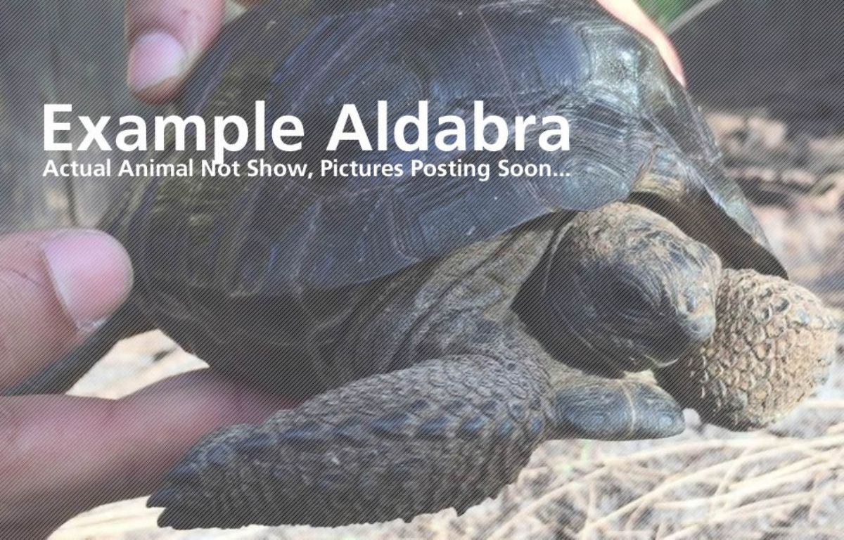 10634/screen/Aldabra-Sample.jpg