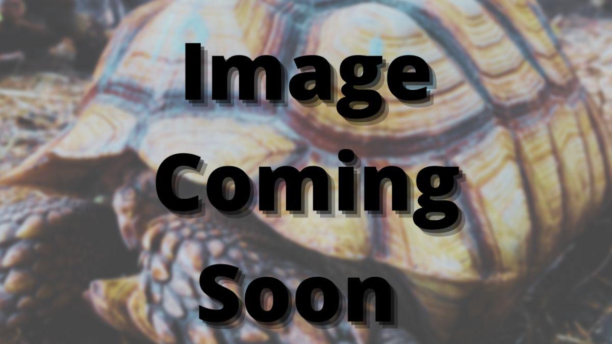 11831/screen/60924CCA-836A-4724-A4C7-F3F8ED8126F8.png