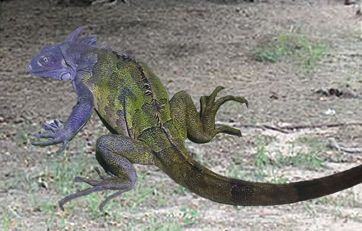 /Iguanas/Green-Color-Morphs/Purple-Camouflage