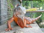 Female True Red Iguana C.jpg