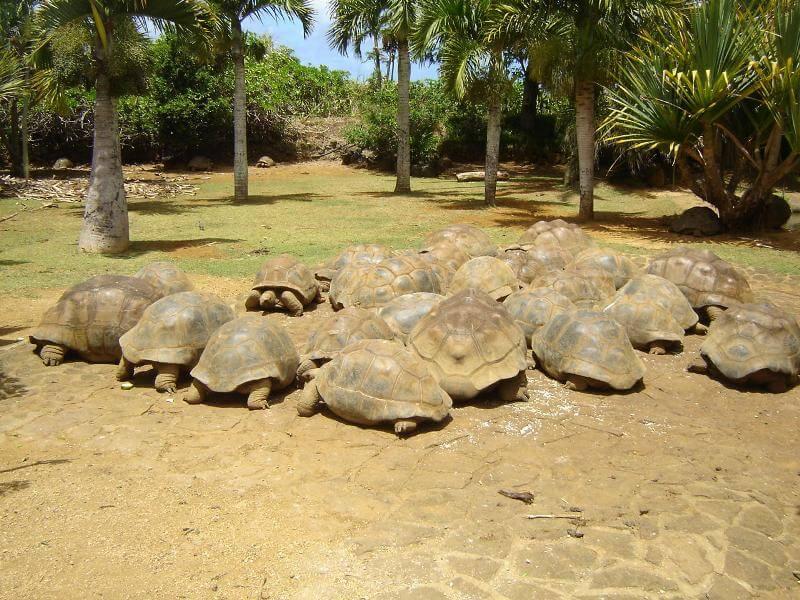 Adults-Mauritius.jpg