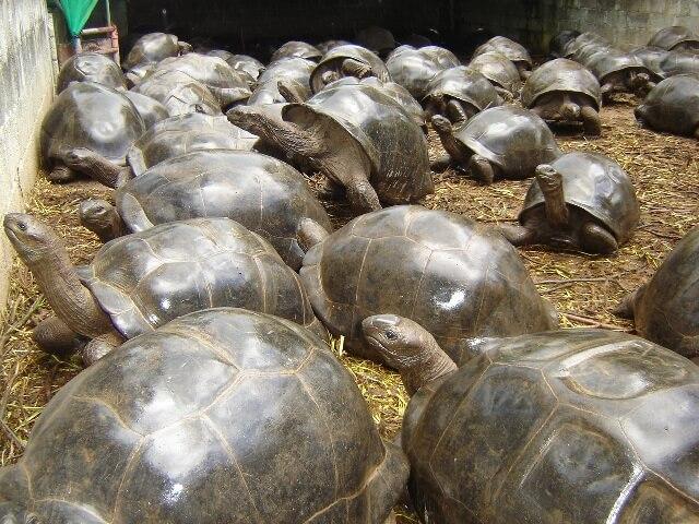 Aldabras-seychelles-breeding-farm.jpg