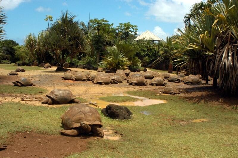 Tortoise-savannah-Mauritius.jpg