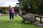 Oliver-chasing-Laura-larhe-Male-Aldabra-Tortoise.jpg
