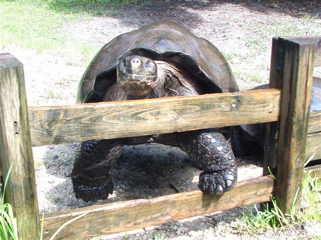 /Tortoises/Galapagos