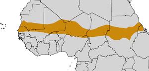 Sahel of Sahara Desert Tortosie