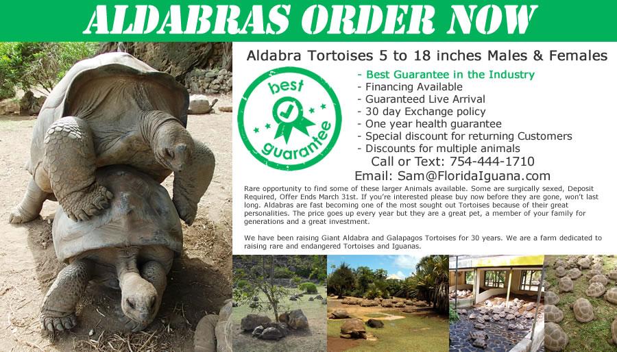 Aldabra-Special