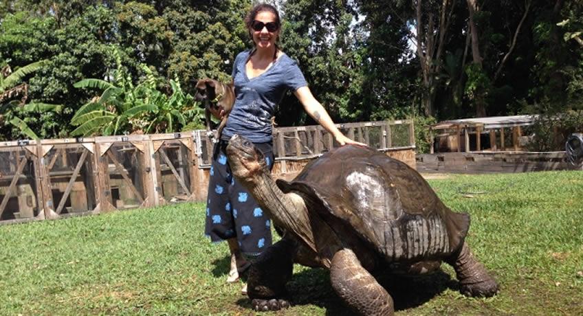 Florida Iguana Tortoise Breeders