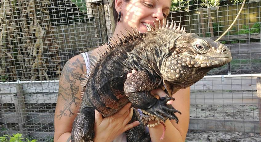 Florida Iguana Amp Tortoise Breeders