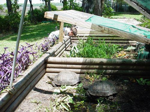 https://www.floridaiguana.com/pics/ARTICLES/16/tortoise-pen-10-500.jpg