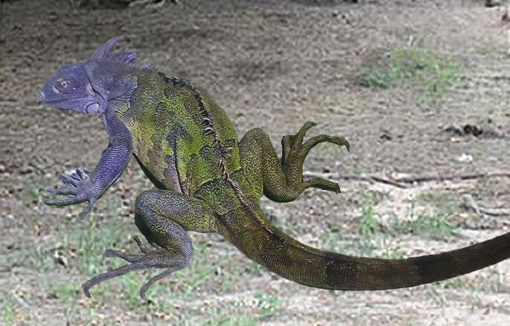 Blue Iguana For Sale : Iguanas reptiles and amphibians in canada kijiji classifieds