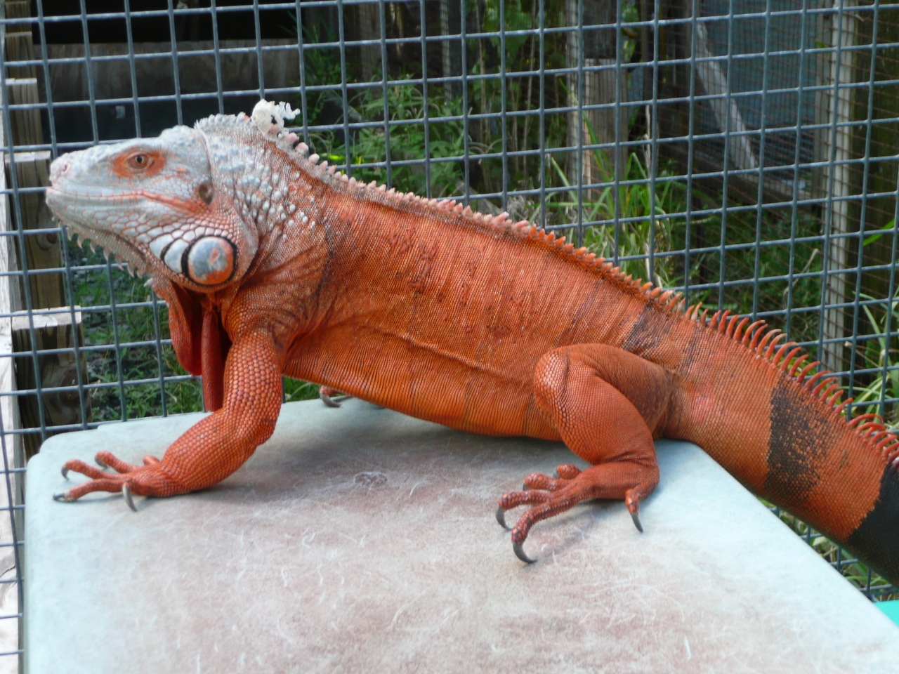 RE: Great, now I'm craving Red Iguana. (TNT) - CougarBoard.com