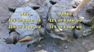 Aldabra Sex Determination