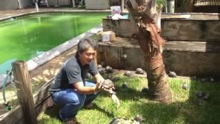 Processing 95% Aldabra Hatching tortoise overload