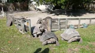 Tortoises make an exit