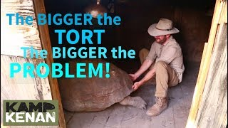 SAD Leg and Walking PROBLEMS for Aldabra Tortoise
