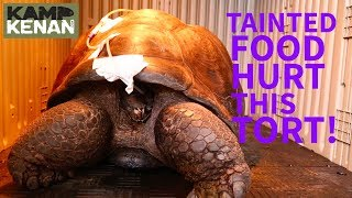 Is Contaminated FOOD Making Your Tortoise SICK?